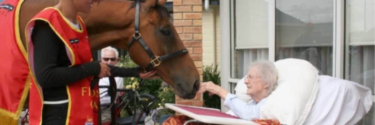 RV to throw birthday bash for retired racehorses in Geelong